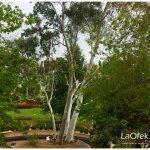 in-the-area-bustan-hazait-mini-botanical-gardens